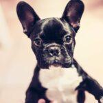 dog, curious, animal