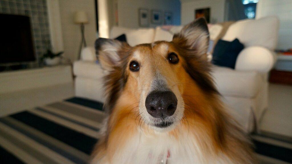 dog, pet, cute-705820.jpg