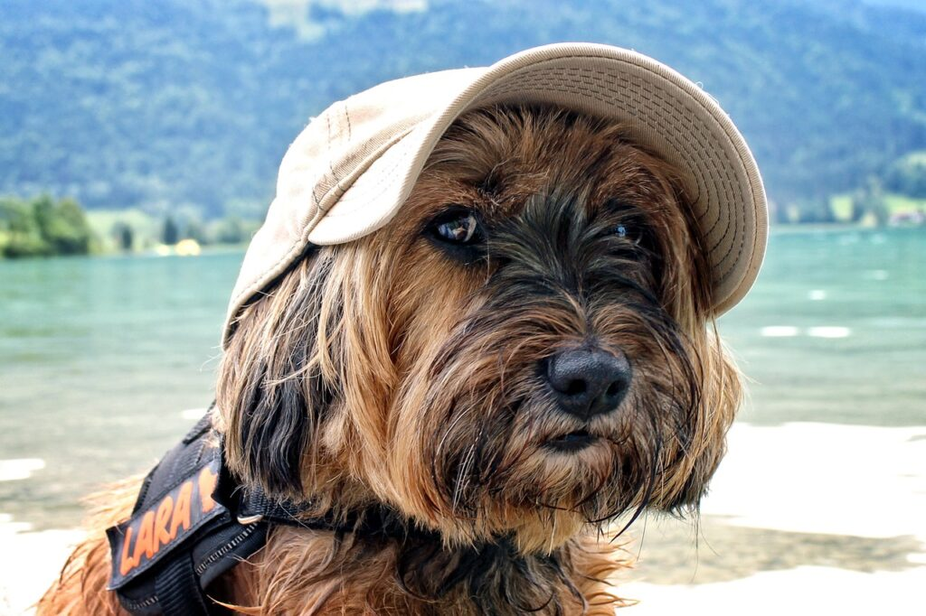 dog, face, portrait-858646.jpg