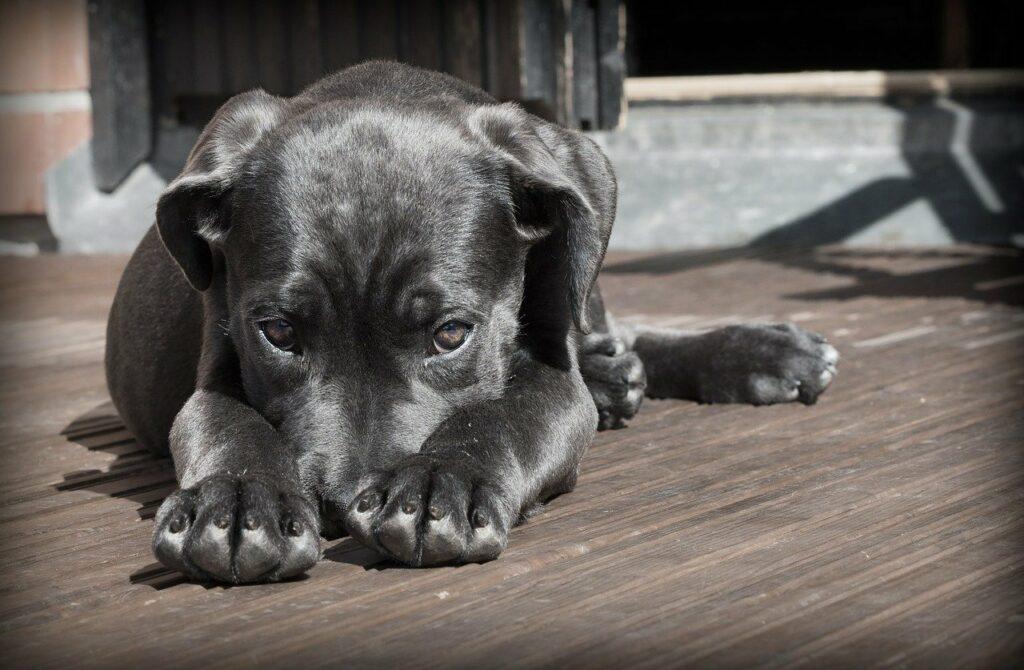 dog, puppy, pet-423398.jpg