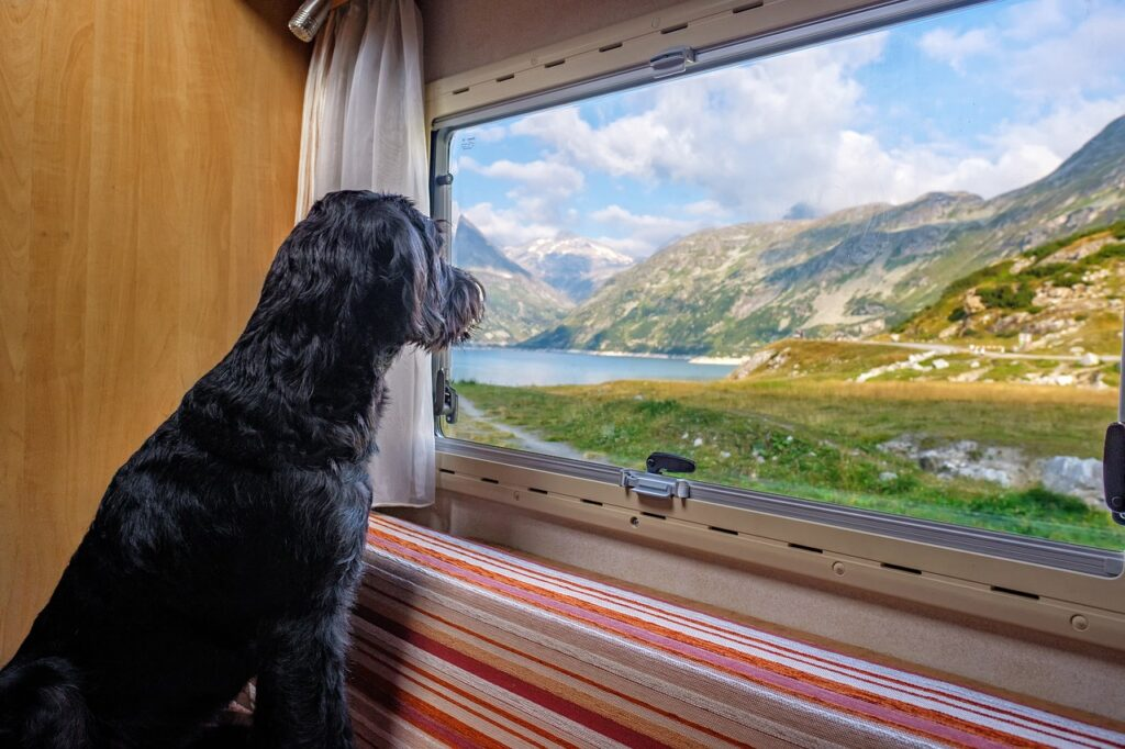 view, see, dog-4487574.jpg